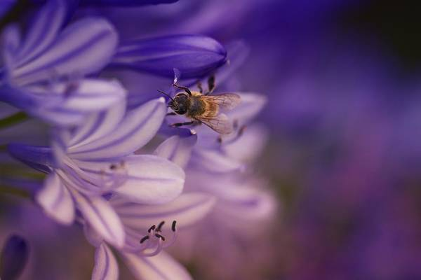 Wall Art - Photograph - Beauty And The Bee by Jade Moon