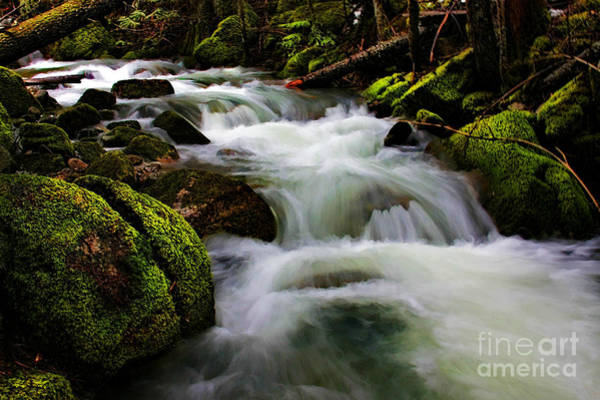 Wall Art - Photograph - Beauty Bay Creek by Scarlett Images Photography