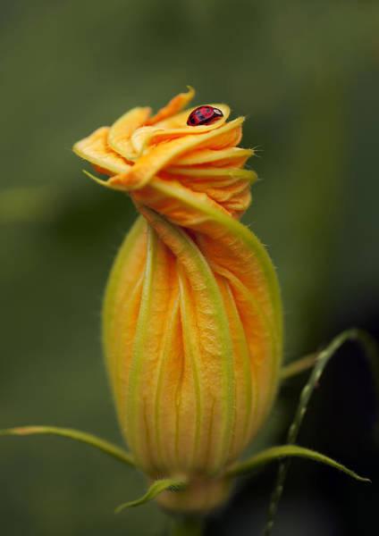 Photograph - Beauty by Gouzel -