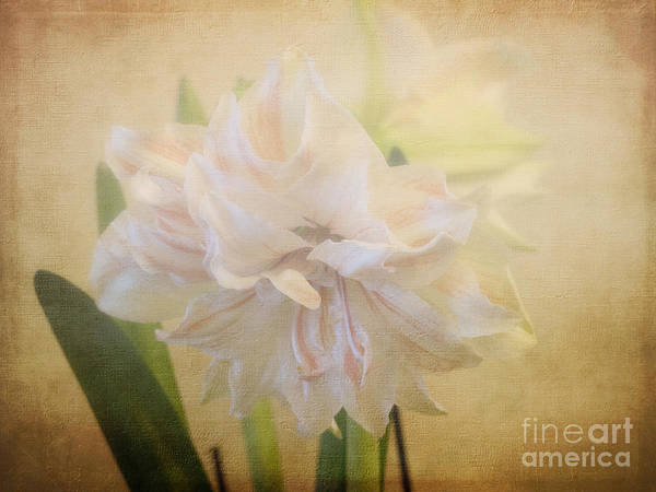 Photograph - Beauty In A Mist by Brenda Kean