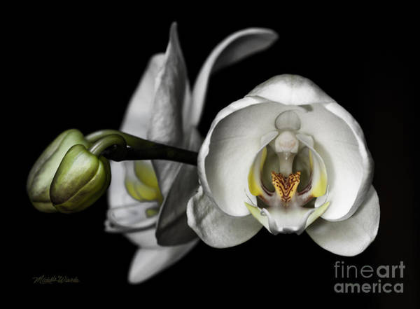 Photograph - Beauty In Symmetry by Michelle Constantine