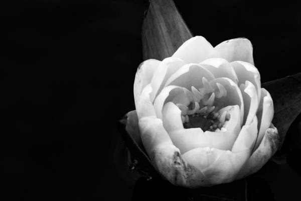 Photograph - Beauty In The Dark by Julie Andel