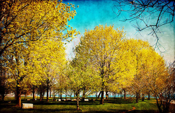 Photograph - Beauty In The Park by Milena Ilieva