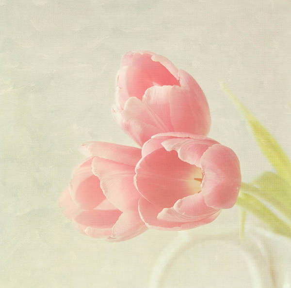 Flores Photograph - Beauty In Three by Kim Hojnacki