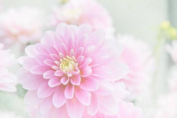 Photograph - Beauty Iv by Sharon Mau
