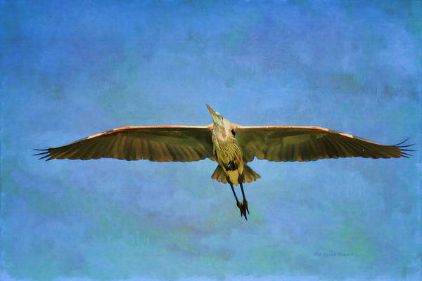 Photograph - Beauty Of Flight Textured by Deborah Benoit