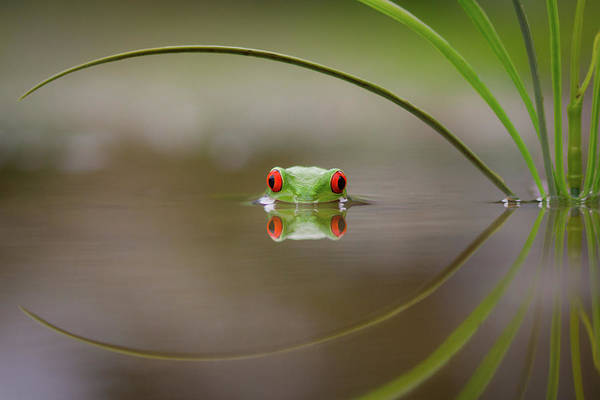 Frog Photograph - Beauty Of Reflection by Kutub Uddin