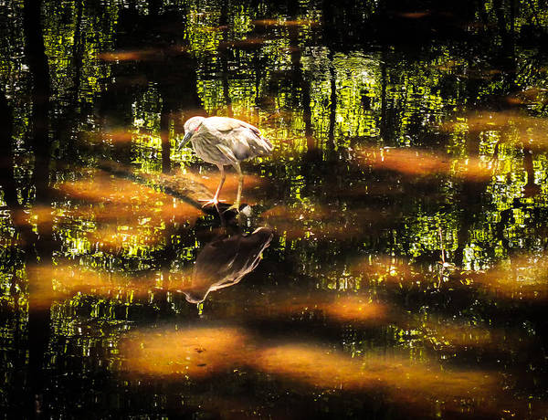 Photograph - Beauty Of The Bog by Karen Wiles