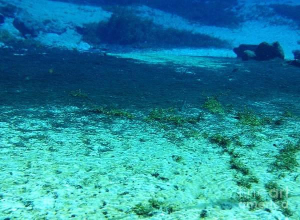 Photograph - Beauty Underwater by D Hackett