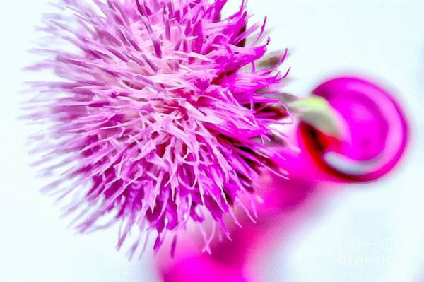 Thistle Photograph - Beauty Within by Krissy Katsimbras