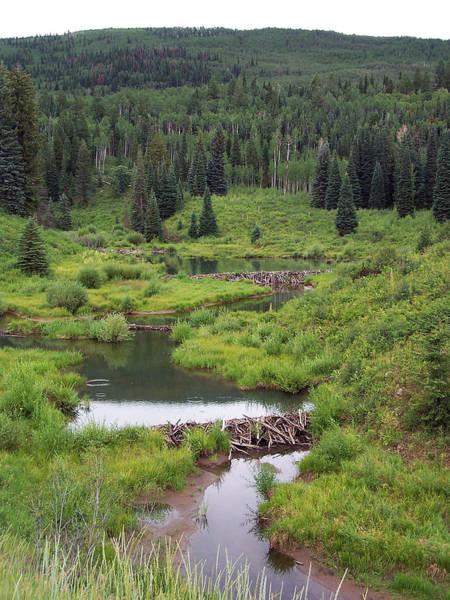 Photograph - Beaver Dams by Jennifer Robin
