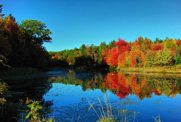 Beaver Pond Foliage Art Print