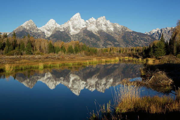 Beaver Pond Wall Art - Photograph - Beaver Pond, Grand Tetons by Ken Archer
