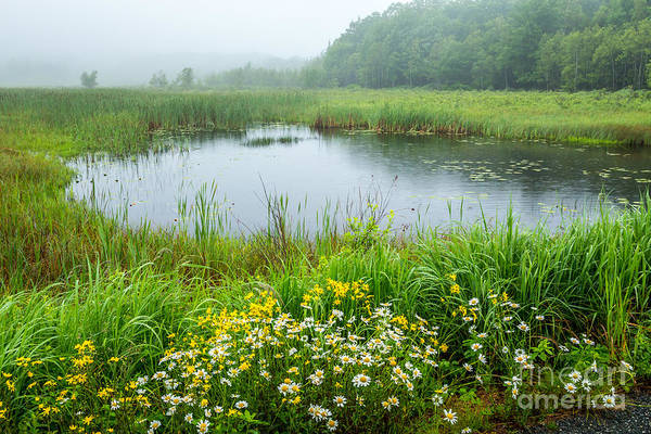 Photograph - Beaver Pond In Acadia by Susan Cole Kelly