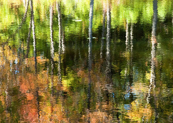 Photograph - Beaver Pond Reflections 1 Gatineau Park Quebec by Rob Huntley