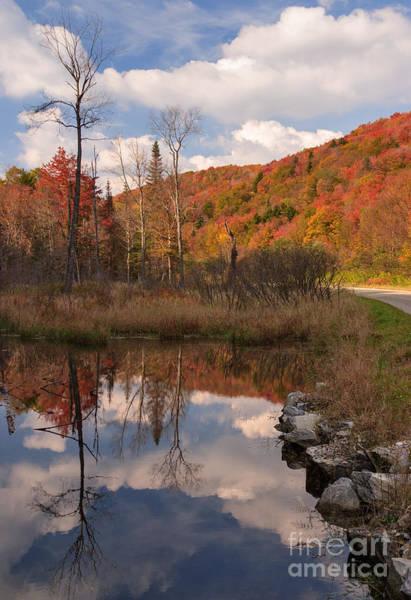 Photograph - Beaver Pond Symmetry by Charles Kozierok