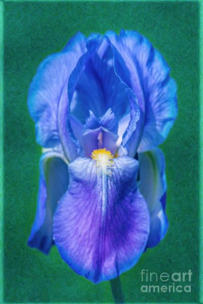 Photograph - Beckoning Blue Iris Abstract Garden Art By Omaste Witkowski by Omaste Witkowski