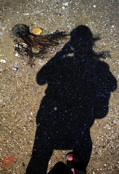 Photograph - Becoming One With The Beach Stones by Colette V Hera  Guggenheim