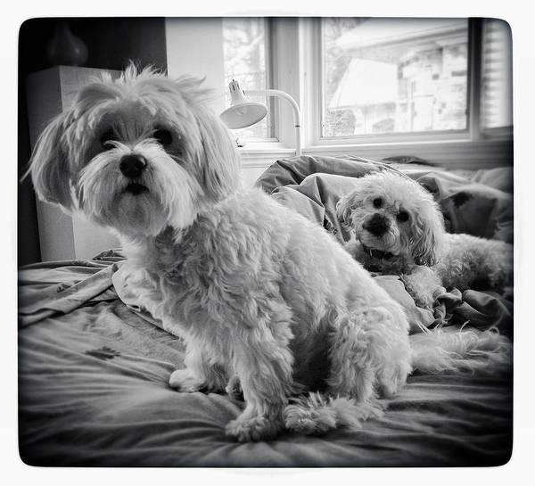 Photograph - Bed Buddies by Natasha Marco