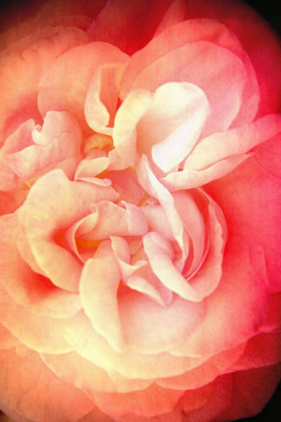 Wall Art - Photograph - Bed Of Roses by Shawn King