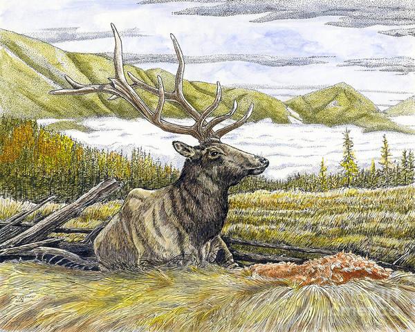 Elk Mountain Drawing - Bedded Elk  by Kenneth or Susan Posselt