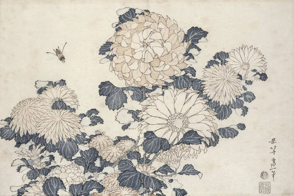 Wall Art - Painting - Bee And Chrysanthemums by Katsushika Hokusai