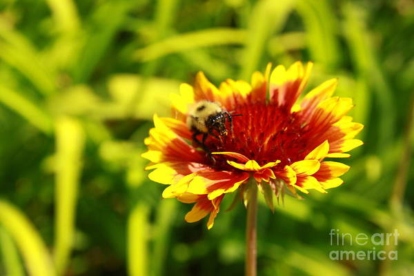 Wall Art - Photograph - Bee At Work 2 by Victoria  Dauphinee