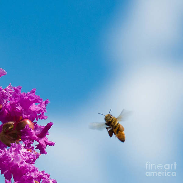 Photograph - Bee Aware by Kathi Shotwell
