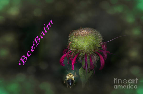 Wall Art - Photograph - Bee Balm by The Stone Age