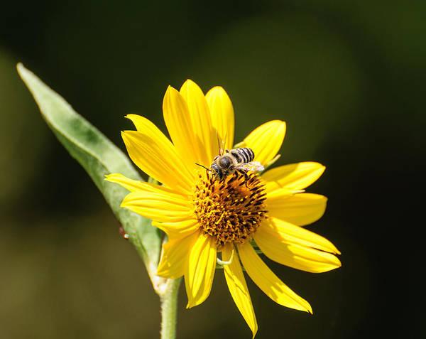 Photograph - Bee Flower by John Johnson