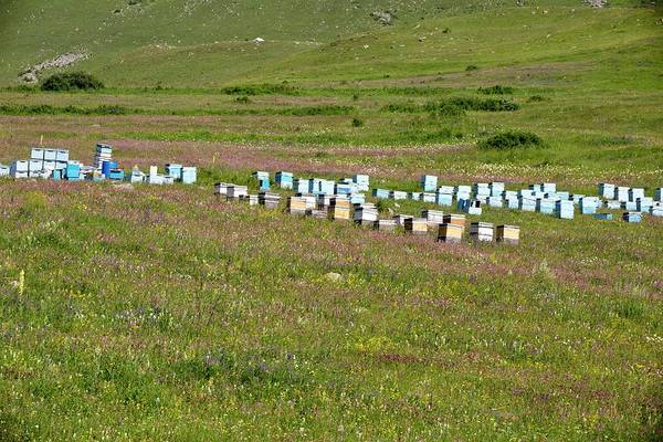 Bee Hive Photograph - Bee Hives In Grassland by Bob Gibbons
