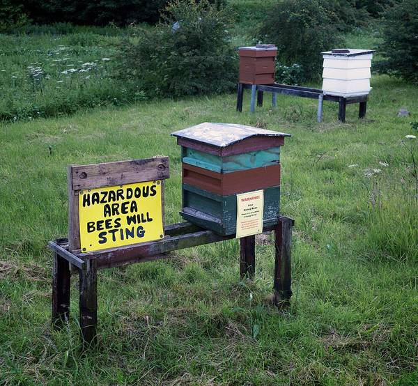 Bee Hive Photograph - Bee Hives by Robert Brook