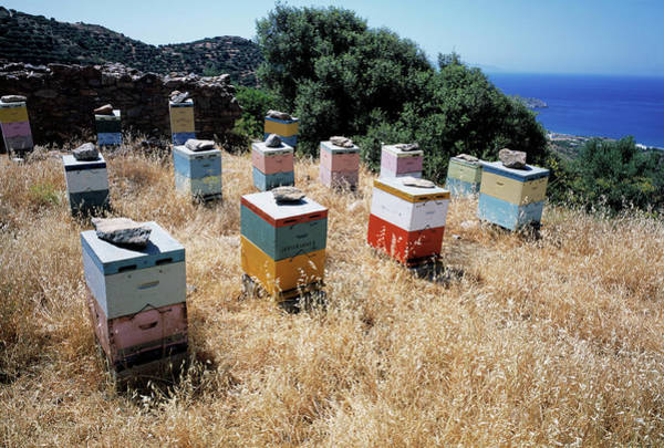Bee Hive Photograph - Bee Hives by Tony Craddock/science Photo Library