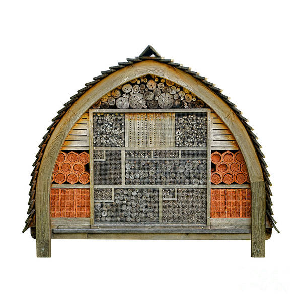 Hibernation Wall Art - Photograph - Bee Hotel by Olivier Le Queinec