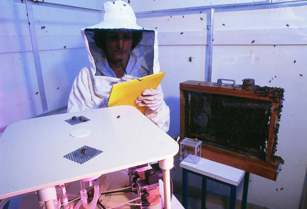 Bee Hive Photograph - Bee Research by Pascal Goetgheluck/science Photo Library