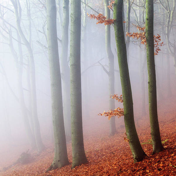 Fog Photograph - Beeches by Martin Rak