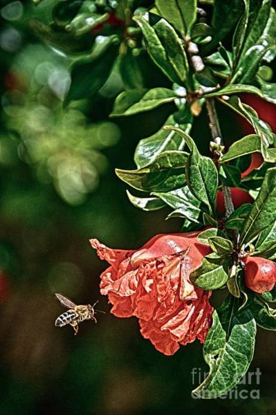 Photograph - Beeing There by Ken Williams