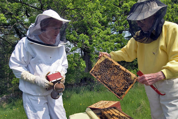 Bee Hive Photograph - Beekeepers Inspecting A Beehive by Simon Fraser/science Photo Library