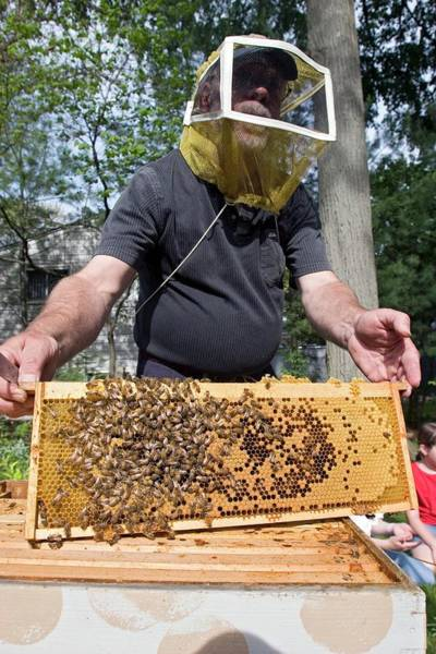 Royal Oak Photograph - Beekeeping Class by Jim West