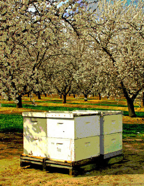 Photograph - Bees Work 4 Food by Joseph Coulombe