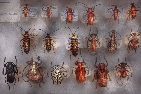 Photograph - Beetles - The Usual Suspects  by Mike Savad