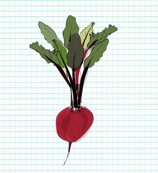 Beetroot Wall Art - Photograph - Beetroot Superfood by Sharpenson Ltd/science Photo Library