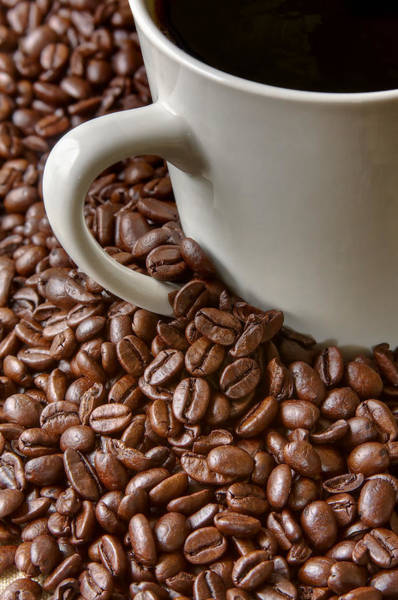 Coffee Mug Photograph - Beginnings by John Hamlon