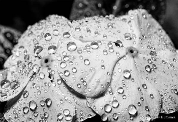 Photograph - Bejeweled Twins - Bw  by Christopher Holmes