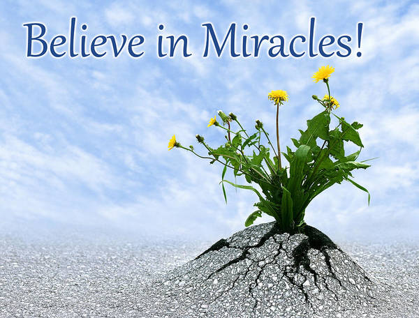Photograph - Believe In Miracles by Dreamland Media