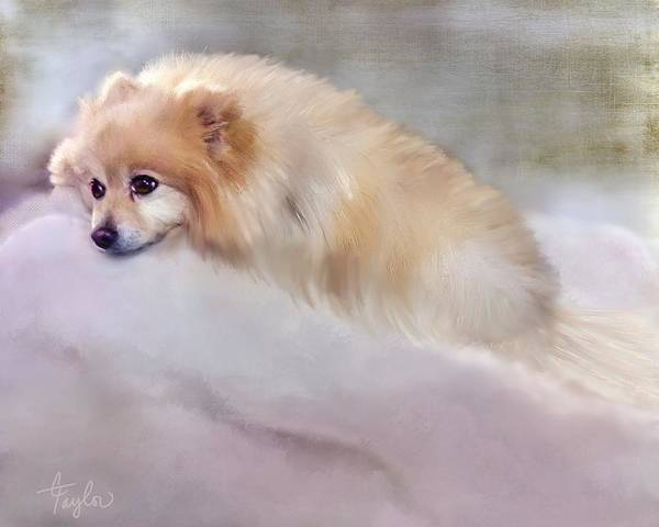 Pomeranian Painting - Bella Boo by Colleen Taylor