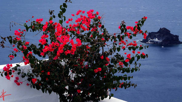 Photograph - Bella Flowers Santorini Island Greece by Colette V Hera  Guggenheim