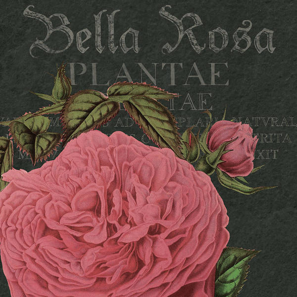 Wall Art - Drawing - Bella Rosa Square by MGL Meiklejohn Graphics Licensing