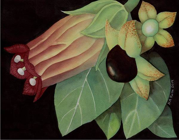 Wiccan Painting - Belladonna Flower And Berries by Harold A Roth