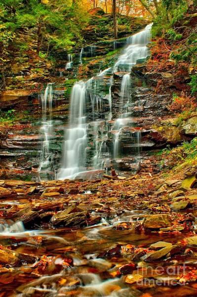 Photograph - Below Ganoga Falls by Nick Zelinsky